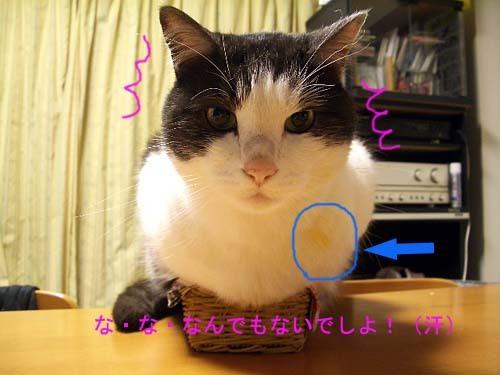 IMGP5455のコピー.jpg